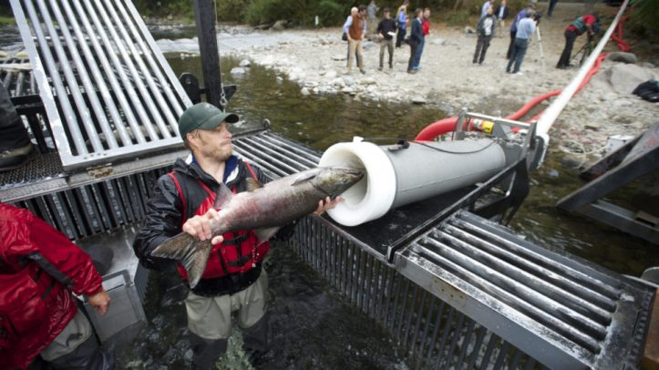 1565598079-fish-cannon-loading-960x540.jpg
